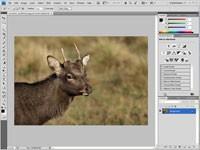 Interfejs Photoshopa, chociaż na pozór skomplikowany, to dla wielu wzór w dziedzinie edytorów graficznych.