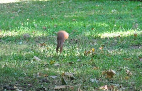 Wiewiórka 3