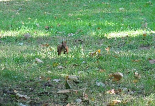 Wiewiórka 4