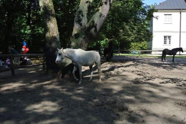 Koń na Nikon J1
