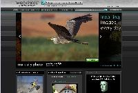 www.webshots.com