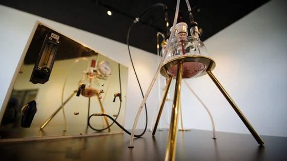Szklany klosz wykorzystany w eksperymencie odzyskania przez bakterie złota z chlorku złota.