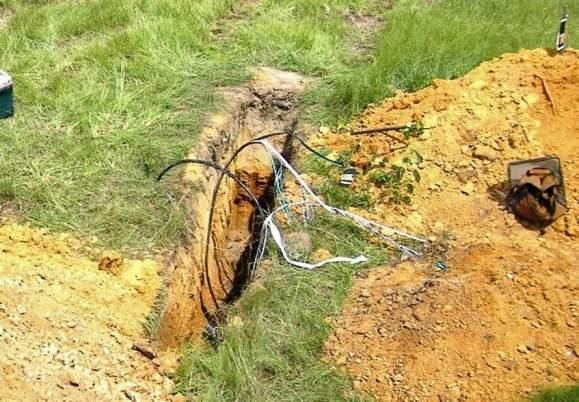 Winę za niecałe 17 procent wszystkich uszkodzeń sieci teletransmisyjnych ponoszą... wiewiórki.