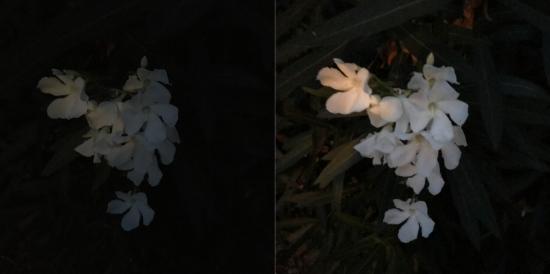 Największa różnica dotyczy słabego oświetlenia, gdzie iPhone 7 (po prawej) potrafi uchwycić o wiele więcej szczegółów niż iPhone 6s (po lewej). fot. Susie Ochs