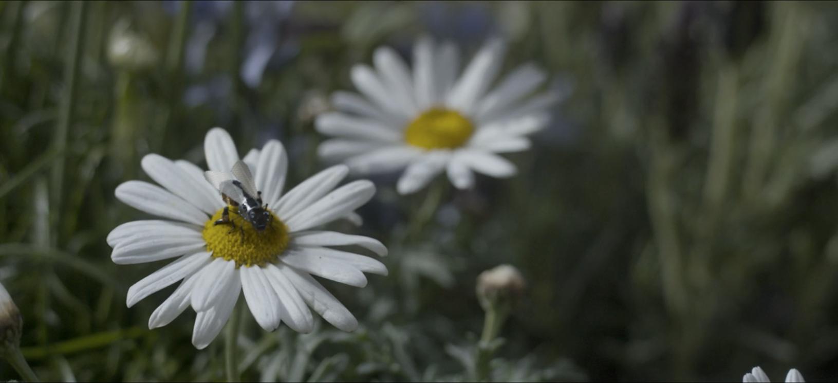"""Kadr z serialu """"Black Mirror"""", którego scenarzyści też wymyślili robo-pszczoły"""
