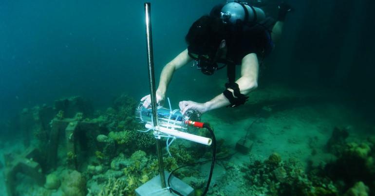 CORaiL czyli SI rusza ratować rafy koralowe