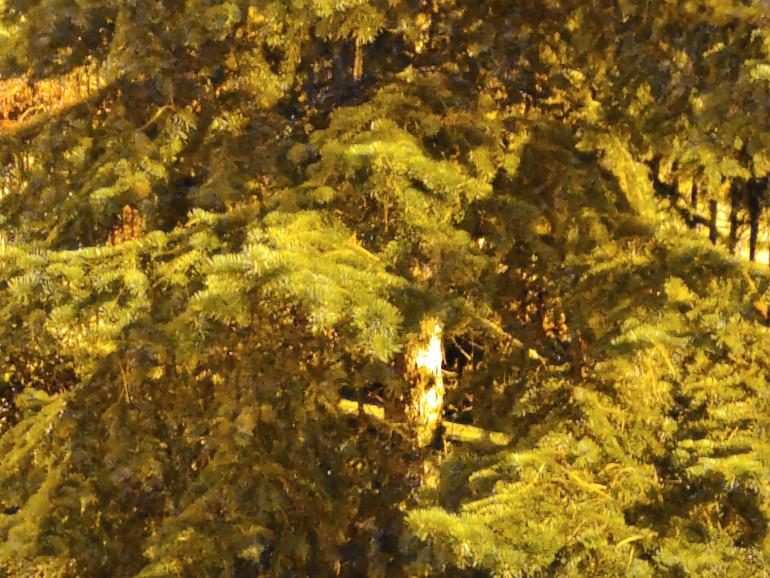 Zdjęcie nocne z trybem Ultra Night - 2x zoom, widoczne szumy i brak ostrości