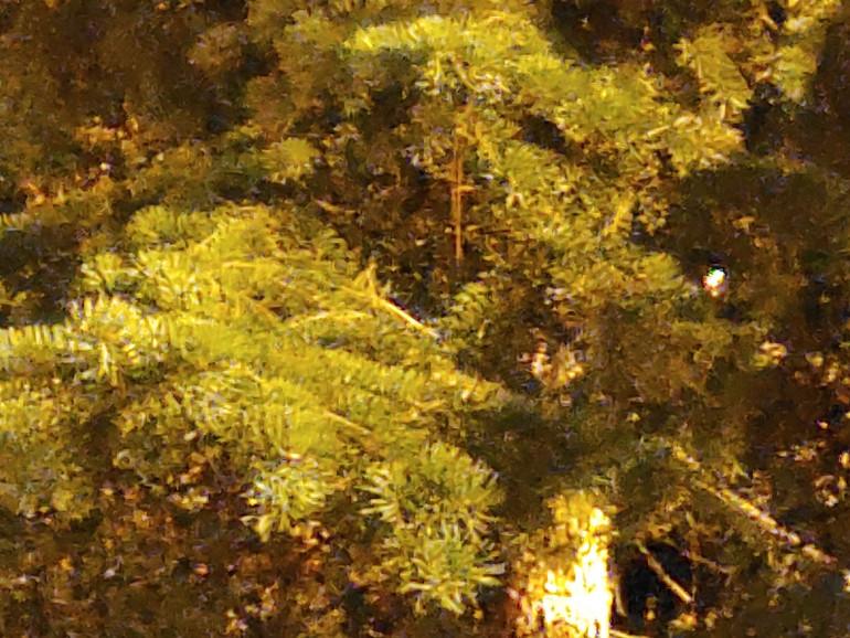 Zdjęcie nocne z trybem Ultra Night - 5x zoom, widoczna znaczna ilość szumów i brak ostrości